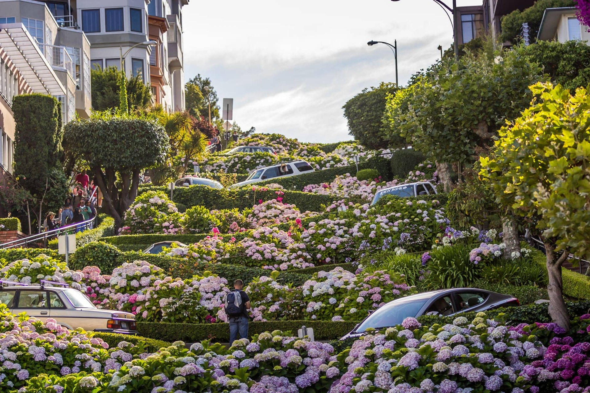 Flowers on Lombard Street, San Fransisco